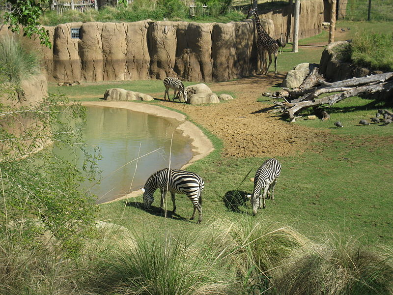 Animal cruelty: Why I stopped going to zoos
